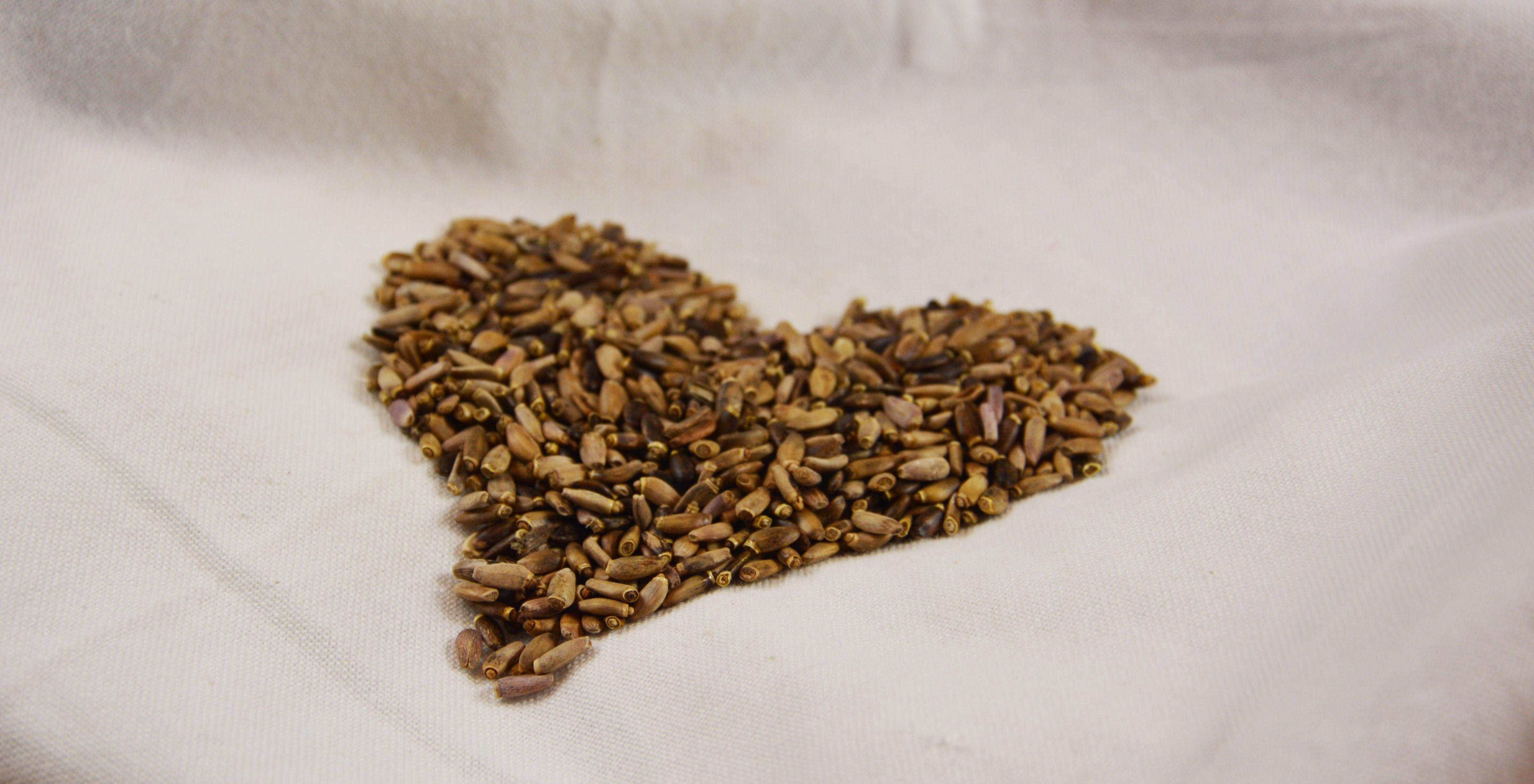 Pestrec-semeno-nedrvené-farmville